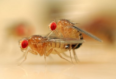 54_copulatingflies0jpg