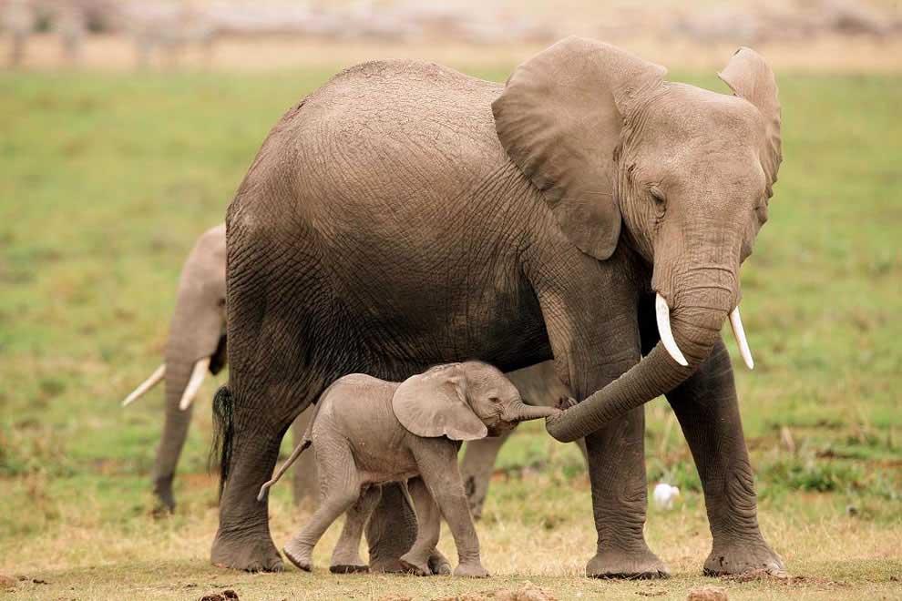 Anne-fil-ve-bebeği