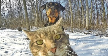 fenomen_manny_kedi_sosyal_medya_social_media_cat_selfie_cute_kitty