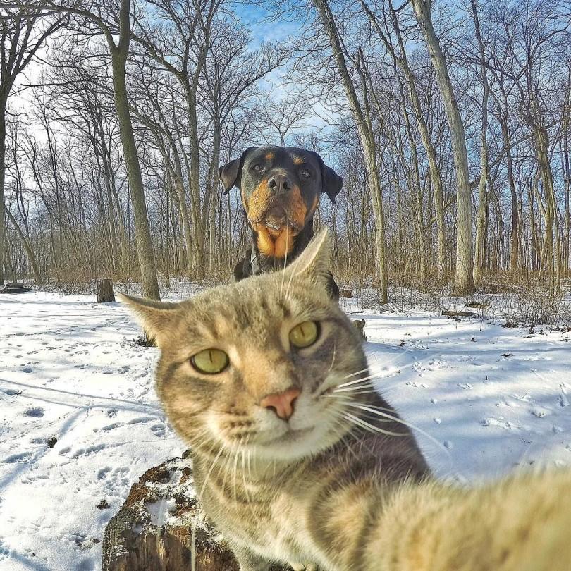fenomen_manny_kedi_sosyal_medya_social_media_cat_selfie_cute_kitty