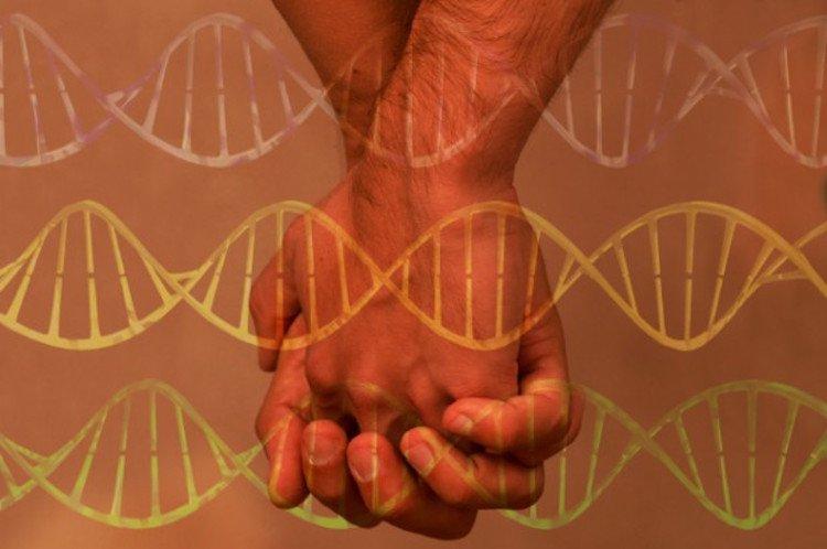 gay genetics