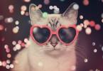 cat-x750