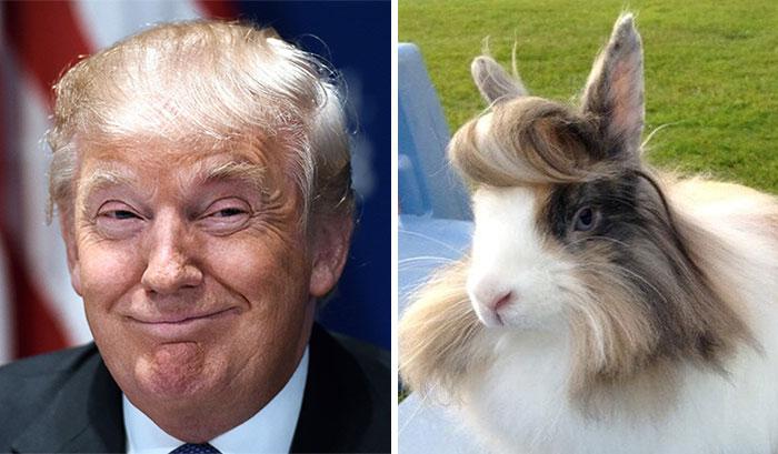 En Komik Donald Trump Fotoğrafları