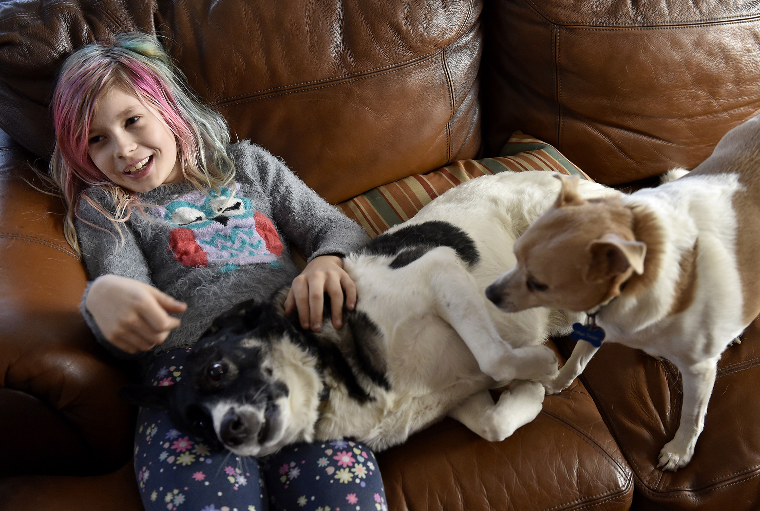 Avery Jackson hangs out with Mickey and Max, right, Wednesday, Dec. 21, 2016 in her Kansas City, Mo., home. (Jill Toyoshiba/Kansas City Star/TNS)
