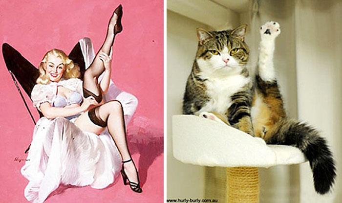 Kedilerden Pin-Up Kız Pozları