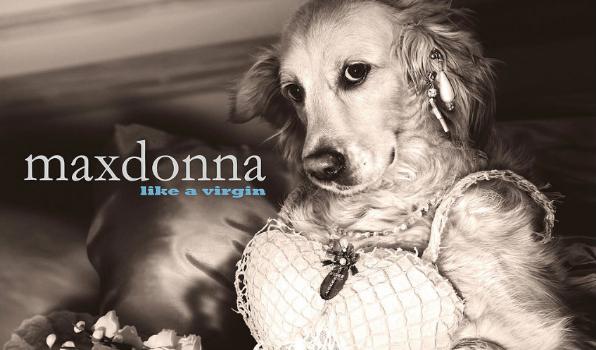 Bir Fotoğrafçı, Madonna'nın İkonik Pozlarını Köpeğiyle Yeniden Canlandırdı