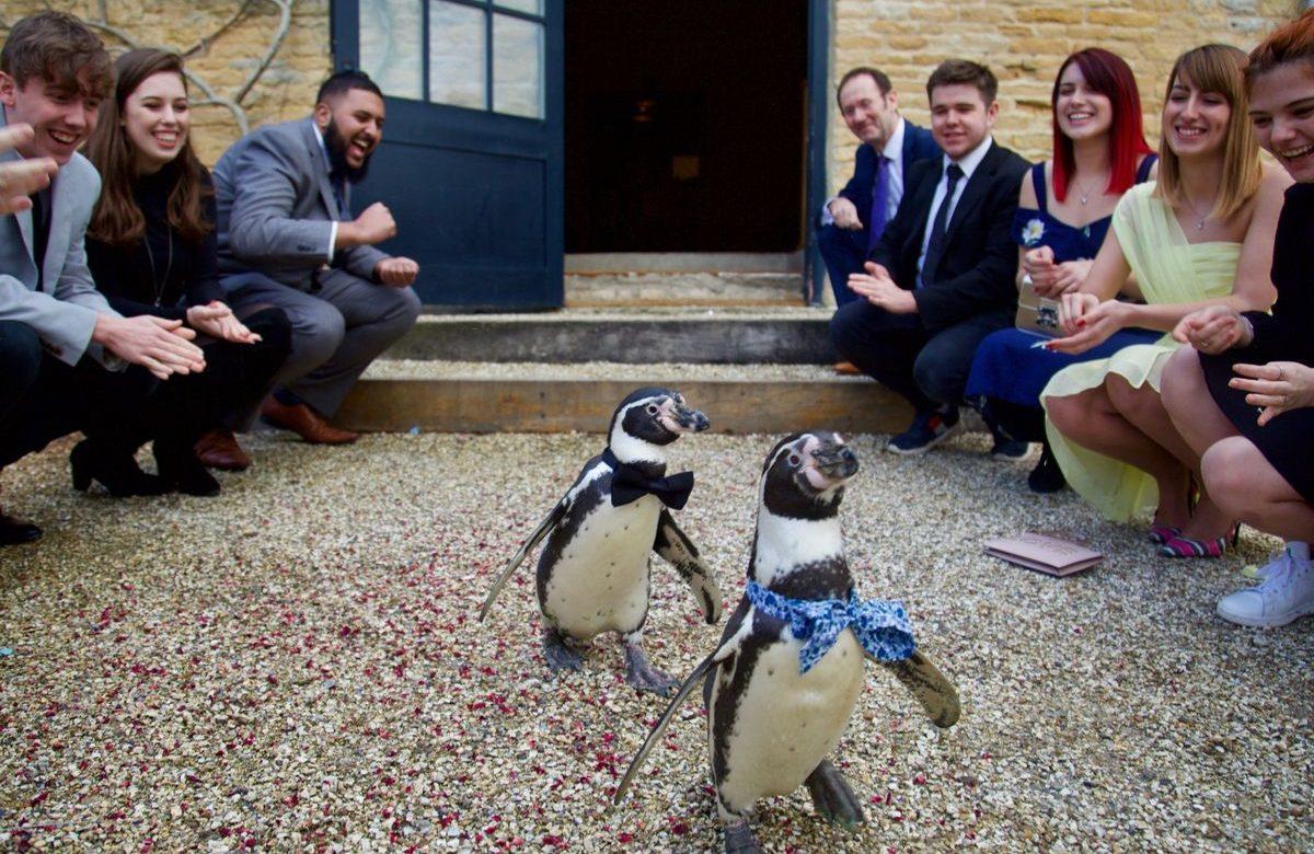 İzleyin: Dünya Tatlısı Gay Penguenler Evlendi!