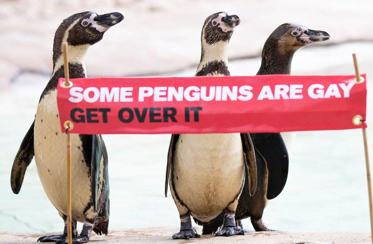Gay Penguenler Onur Yürüyüşü'ne Böyle Davet Edildi