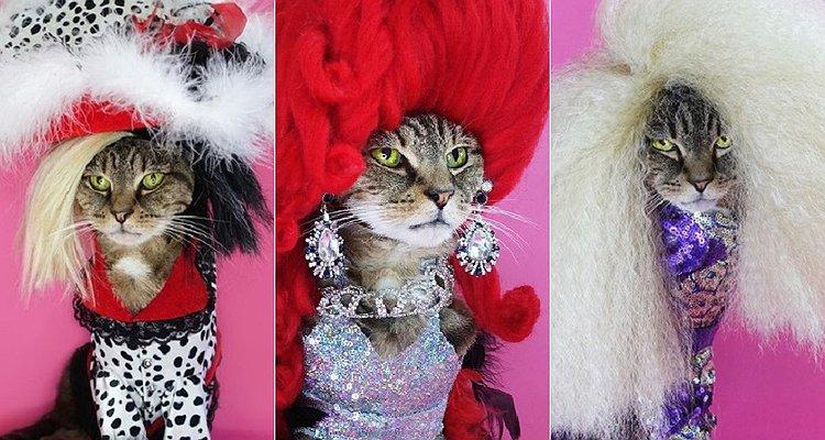 RuPaul's Drag Race Kraliçeleri Kılığına Giren İkonik Kediyle Tanışın