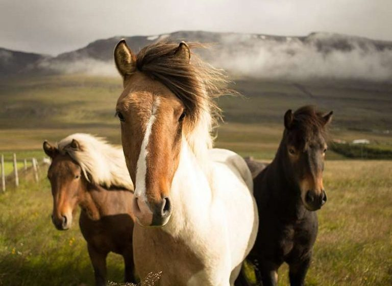 """""""Atlar Eşcinselliği Tedavi Ediyor"""" Diyen Homofobik Papaz Çiftliğini Kapatmak Zorunda Kaldı"""