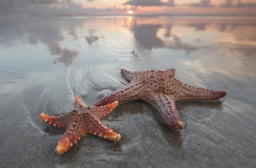 Bilim İnsanları: Denizyıldızları Eşcinsel Seks İçin Hayatlarını Riske Atmaya Meyilli
